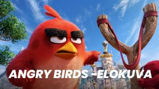 Angry Birds -elokuva (S) - Angry Birds Movie, The